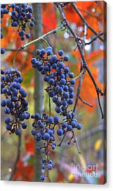 Acrylic Print featuring the photograph Wild Grapes by Jim McCain