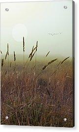 Wild Grass Acrylic Print