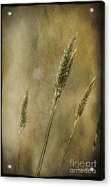 Acrylic Print featuring the photograph Wild Grasses by Chris Armytage