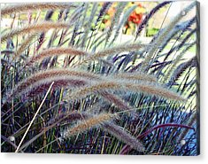 Wild Grasses In Autumn Acrylic Print by Ellen Tully