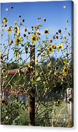 Acrylic Print featuring the photograph Wild Growth by Erika Weber