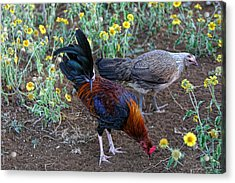 Wild Hen And Rooster Acrylic Print by Linda Phelps