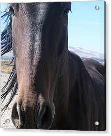 Wild Horse Acrylic Print by Amy Ernst