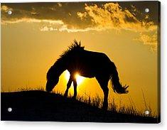 Wild Horse And Setting Sun Acrylic Print