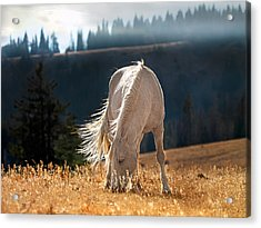 Wild Horse Cloud Acrylic Print by Leland D Howard