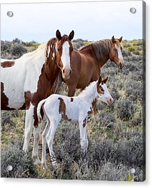 Wild Horse Family Portrait Acrylic Print