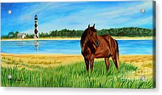Wild Horse Near Cape Lookout Lighthouse Acrylic Print