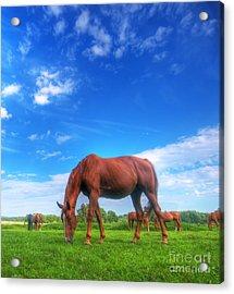 Wild Horse On The Field Acrylic Print by Michal Bednarek
