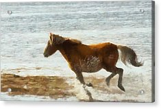 Wild Horse Running Through Water Acrylic Print by Dan Sproul