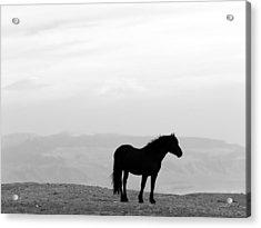 Wild Horse Silhouette Bw Acrylic Print by Leland D Howard