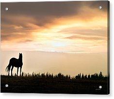 Wild Horse Sunset Acrylic Print by Leland D Howard