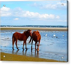 Wild Horses And Ibis 2 Acrylic Print by Cindy Croal