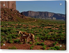 Wild Horses In Monument Valley Acrylic Print by Raul Touzon