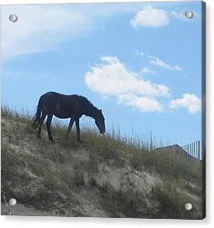Wild Horses Of Corolla 3 Acrylic Print by Cathy Lindsey