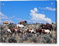 Wild Horses On South Steens Acrylic Print