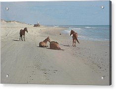 Wild Horses On The Beach Acrylic Print