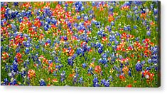 Wild In Texas Acrylic Print by David  Norman