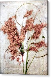 Wild Indian Rice In Autumn #2 Acrylic Print