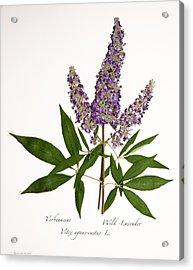 Wild-lavender 1 Acrylic Print