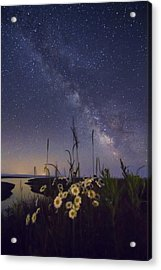Wild Marguerites Under The Milky Way Acrylic Print