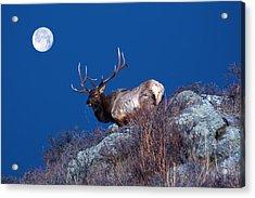 Wild Moon Acrylic Print