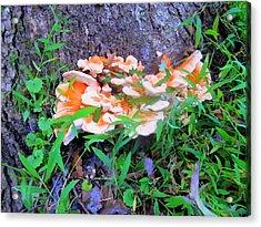Wild Mushroom Acrylic Print by Peter LaPlaca