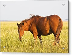 Wild Mustand On The Tidal Flats Acrylic Print