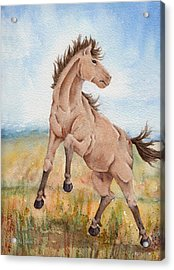 Acrylic Print featuring the painting Wild Mustang With Attitude by Rebecca Davis
