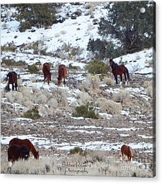 Wild Mustangs In A Nevada Winter Acrylic Print