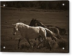 Wild Mustangs Of New Mexico 10 Acrylic Print