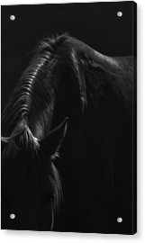 Wild Mustangs Of New Mexico 14 Acrylic Print