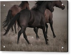 Wild Mustangs Of New Mexico 16 Acrylic Print