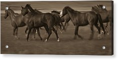 Wild Mustangs Of New Mexico 17 Acrylic Print
