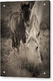 Wild Mustangs Of New Mexico 19 Acrylic Print