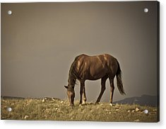 Wild Mustangs Of New Mexico 20 Acrylic Print