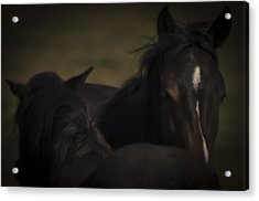 Wild Mustangs Of New Mexico 25 Acrylic Print