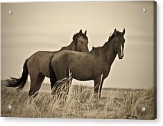 Wild Mustangs Of New Mexico 3 Acrylic Print