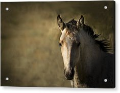 Wild Mustangs Of New Mexico 35 Acrylic Print