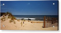 Wild On The Beach Acrylic Print