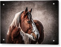 Wild One Acrylic Print by Doug Long