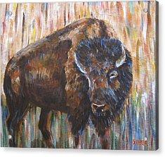 Wild One Acrylic Print