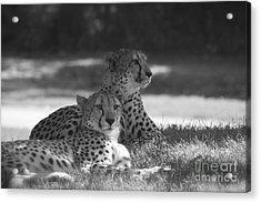 Wild Ones Acrylic Print
