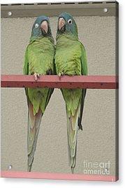 Wild Parrots Acrylic Print