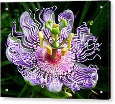 Wild Passion Flower Acrylic Print