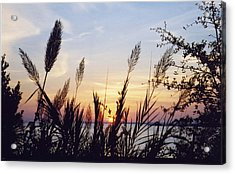 Wild Plumes Acrylic Print by Michele Kaiser