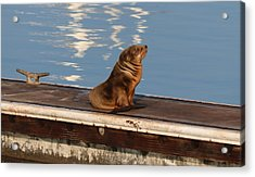 Acrylic Print featuring the photograph Wild Pup Sun Bathing by Christy Pooschke
