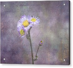 Wild Purple Aster  Acrylic Print by Betty  Pauwels