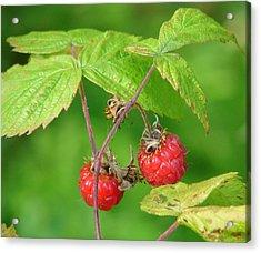 Wild Raspberries Acrylic Print