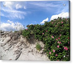 Wild Roses After High Tide Acrylic Print by Kate Gallagher