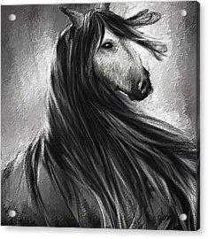 Wild Soul- Fine Art Horse Artwork Acrylic Print